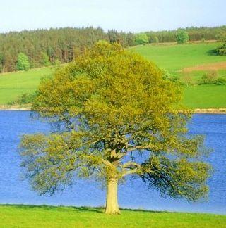 15_19_15---Tree_web