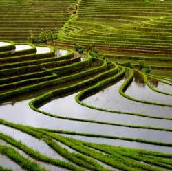 Ricepaddyopt