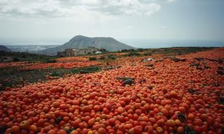 Food-waste-Surplus-tomato-003