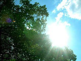 Sunny+day