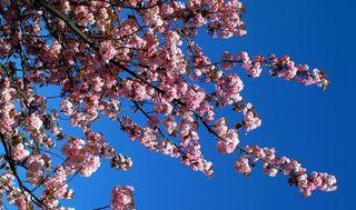 19_10_11---Spring_web