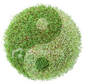 Green_ying_yan
