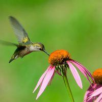 Bird-garden