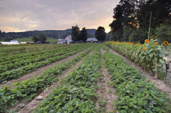 Northeast-farm-bill