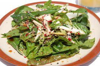 Bartacos-farmers-market-salad-1024x680